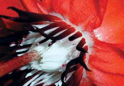 Red flower (photo: Smith and Riegel)
