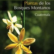 Plants of the Montane Forests