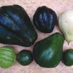 A few of the several varieties of güisquil; used in many of the same ways that the potato is, though it is more tender and has a slightly nutty flavor.