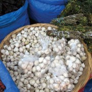 A basket of ajos criollos (garlic) from Irma's stall
