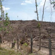 The devastation of deforestation in the basin