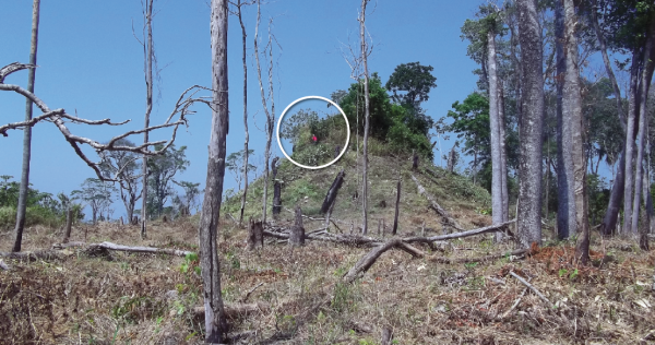 The effects of deforestation, and a person (in red) chopping down a tree at the archaeological site Las Guacamayas  (WCS Guatemala)