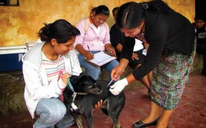 "Vaccinating the dogs and cats campaign (image by <a href=""http://photos.rudygiron.com"">photos.rudygiron.com</a>)"