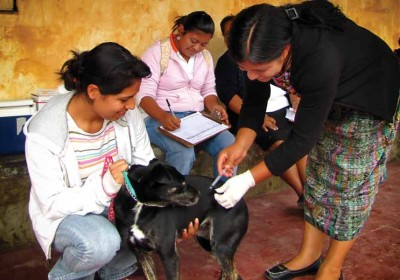 Vaccinating the dogs and cats campaign (image by photos.rudygiron.com)