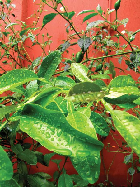 Green leaves in May (image by photos.rudygiron.com)
