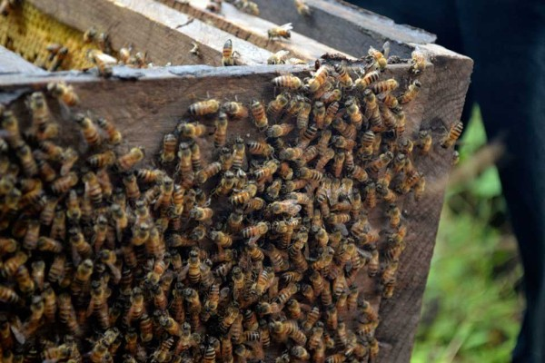 Bees on the hive