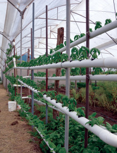 Hydroponic system using PVC