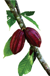 Guatemalan chocolate